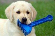 fotografijka - rozbawiony pies